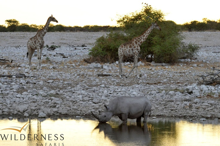 Andersson's Camp - The waterholes attract huge numbers of wildlife, especially during the drier months. #Safari #Africa #Namibia #WildernessSafaris