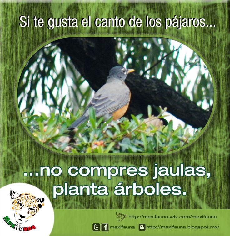 Si te gusta el canto de los pájaros... no compres jaulas, planta árboles.