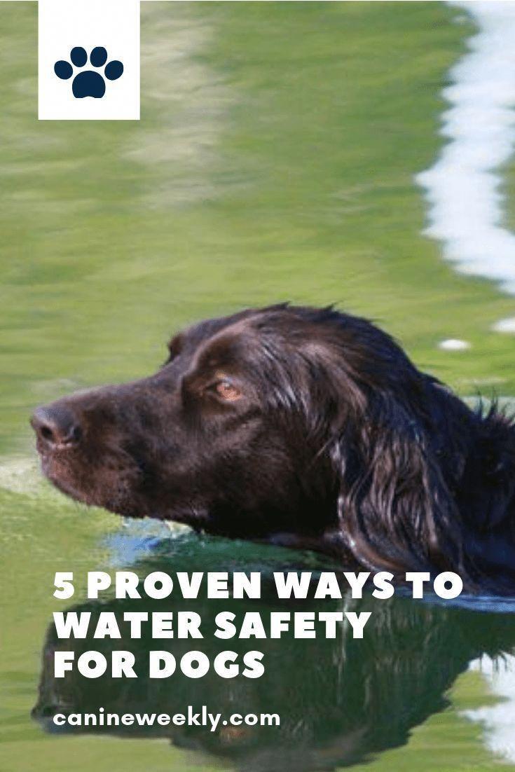 Dog Training Dog Learning Dog Care Pets Dog Dogpictures Dog