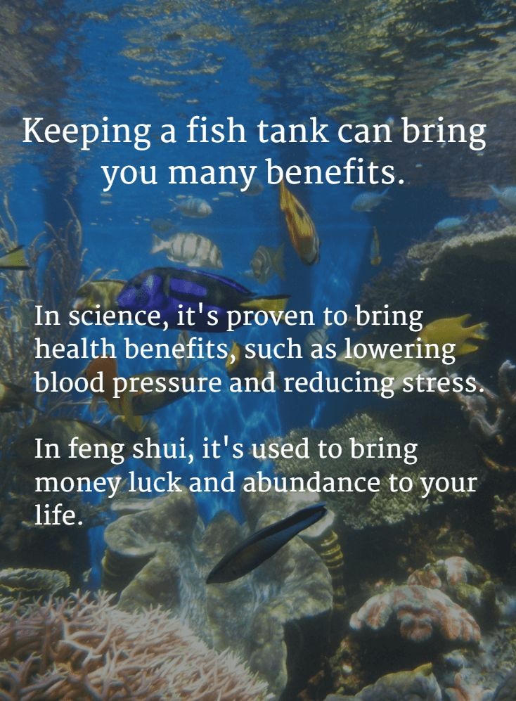 The #Science and #FengShui Benefits of keeping a fish tank or aquarium at home.