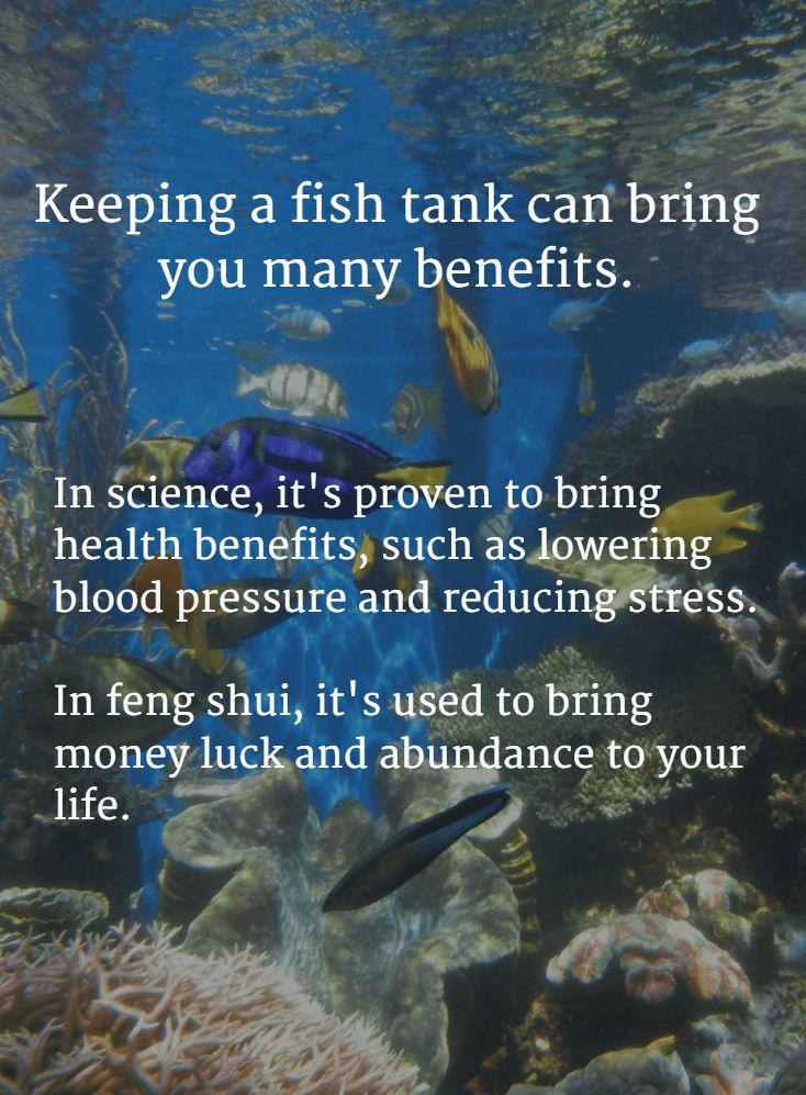 ciência tanque de peixes e feng shui benefícios-min-min