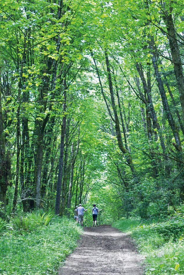 Best trails in Forest Park, Portland