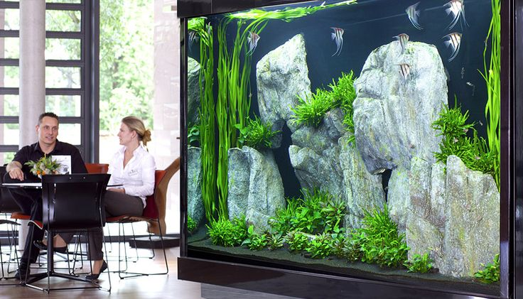 Aquascaping - a whole wall!