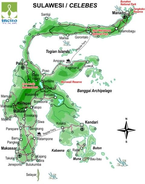 The island of Sulawesi is with the 'coral triangle' which harbours a very high diversity of coral species and abundant marine life. There are also tarsiers on Sulawesi :)
