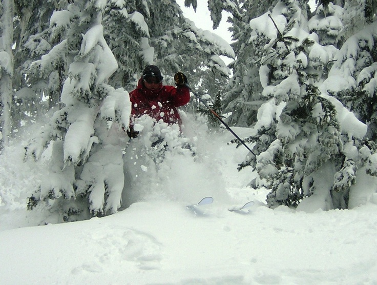 Vanisle trees are made for skiing...