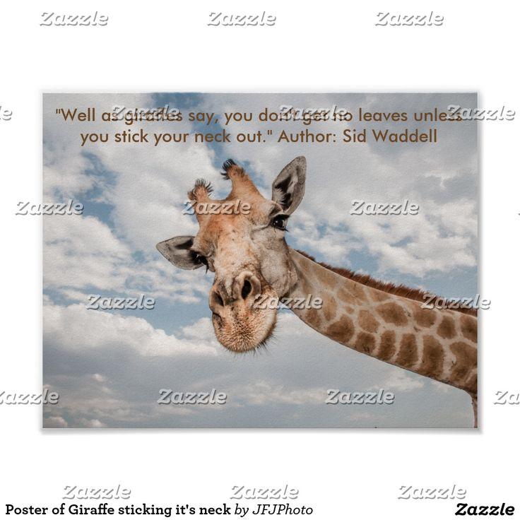 Poster of Giraffe sticking it's neck