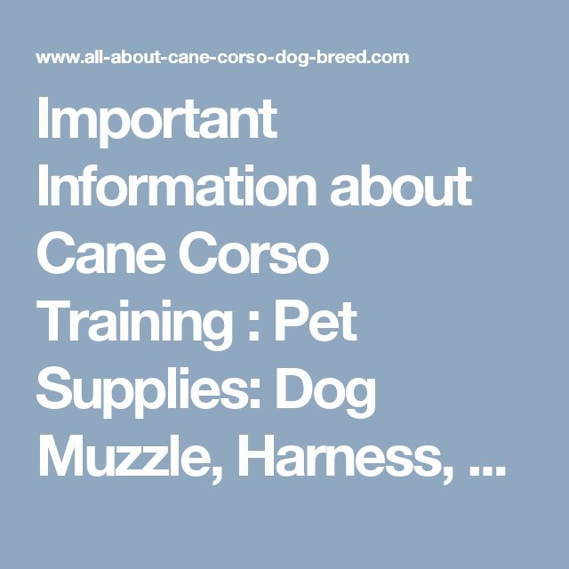 Important Information about Cane Corso Training : Pet Supplies: Dog Muzzle, Harness, Collar, Leash, Toys, Bite Sleeve, Dog Equipment for Large Breed Dogs