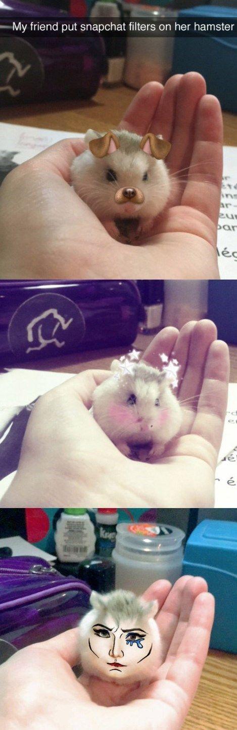 Dieser Hamster wurde zu Snapchat geboren – #dieser…