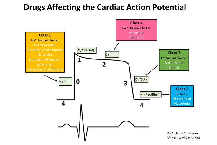 Cardiac action potential antiarrhythmic agent