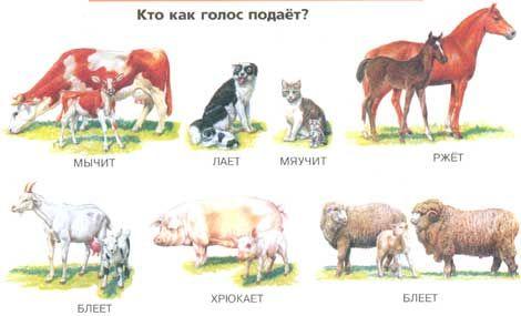 Картинки домашних животных для детей — Используем готовую ...