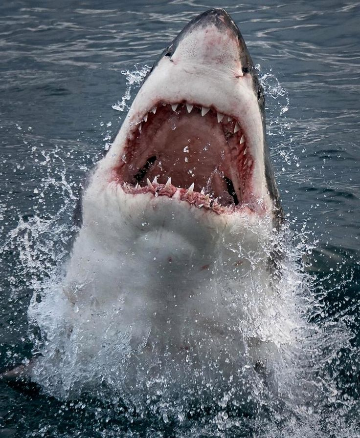 Jumping the Shark (Phrase)