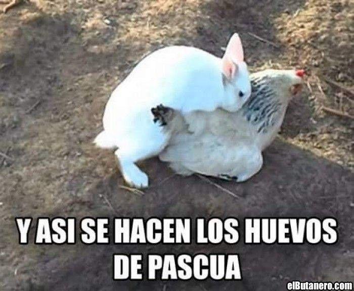 De Donde Salen Los Huevos De Pascua Memes Divertidos Memes Sarcasticos Mejores Chistes Graciosos