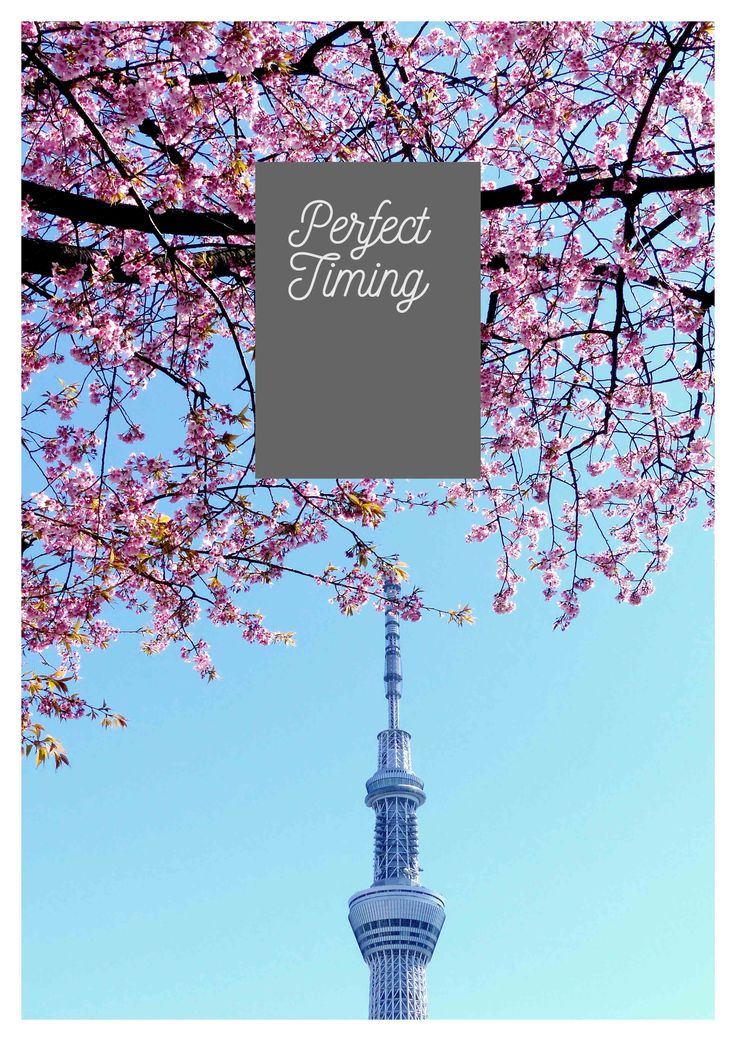 Get the printable for the best cherry blossom times in Japan. Click the image…