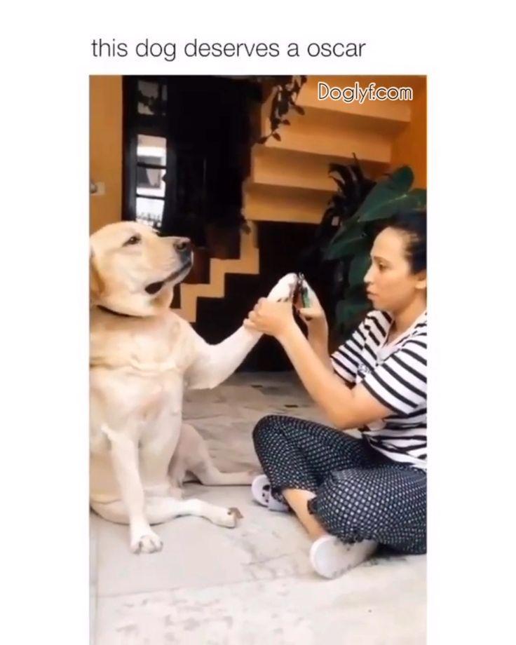 22 Jokes Hilarious Funny Clean Memes Feel Funny Dog Videos Puppy Meme Animal Jokes