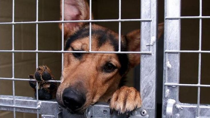 Five Year Jail Term for Animal Cruelty