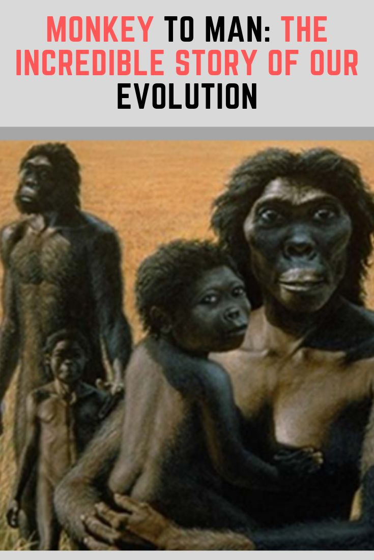 Monkey to Man: The Unbelievable Story of Our Evolution