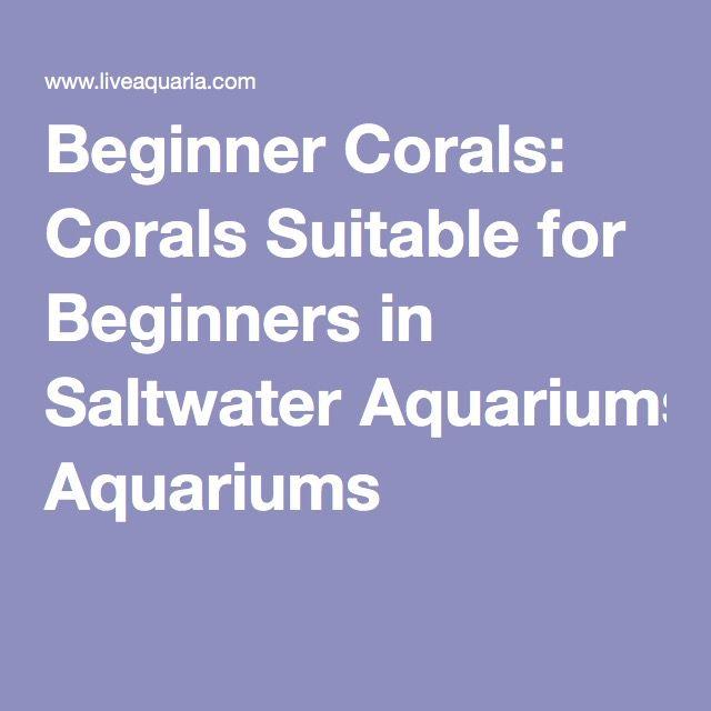 Beginner Corals: Corals Suitable for Beginners in Saltwater Aquariums