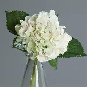 hortantias en vase - Bing images