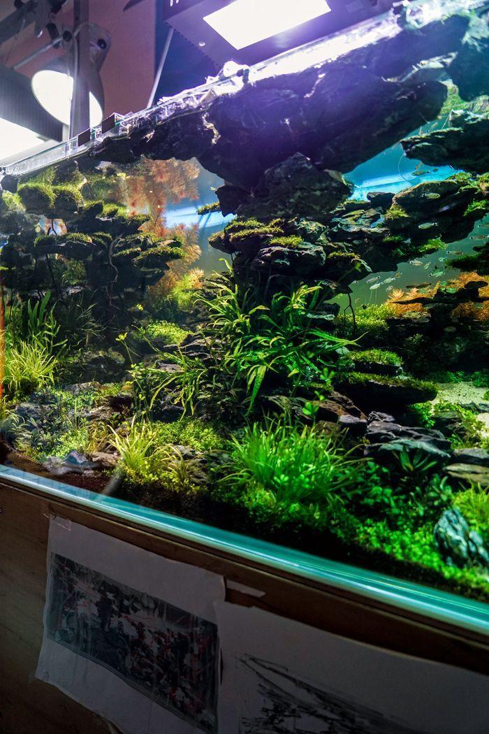 planted fish tank planted aquarium pinterest aquarium