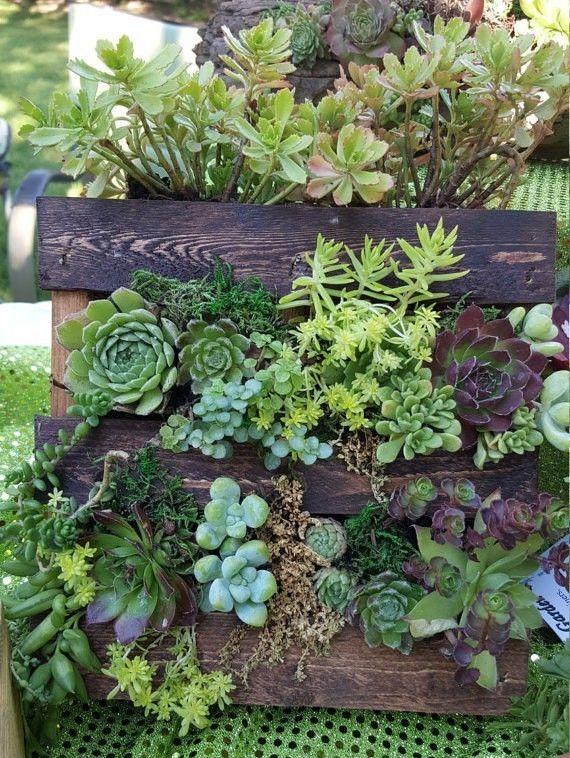 buy it or DIY it: shipping pallet wall garden