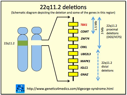 Background and genetics of DIGEORGE SYNDROME . Come and take a look this rare disease .