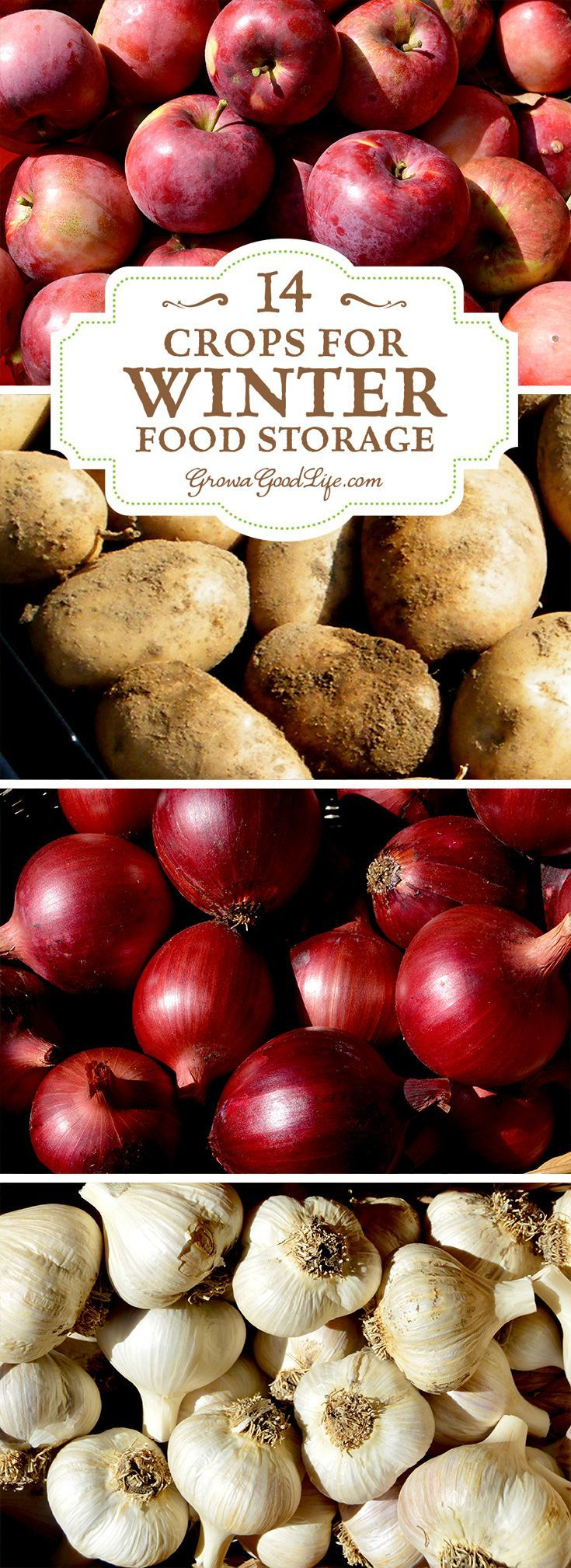 Take advantage of your local farmers' markets and farm stands in the fall and stock up on these locally grown crops for your winter food storage. If you have an area in your basement, crawlspace, or garage that stays cool all winter long, you can make use
