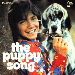 312 Best Images About David Cassidy On Pinterest Shirley