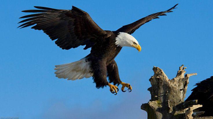 La Renovación del Águila  Full HD ELG Asesores Perú 2014 Vídeo Motivacional - YouTube