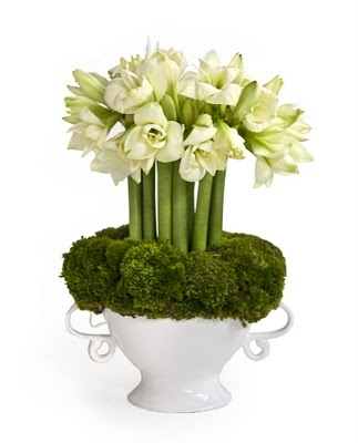 amaryllis and moss arrangement