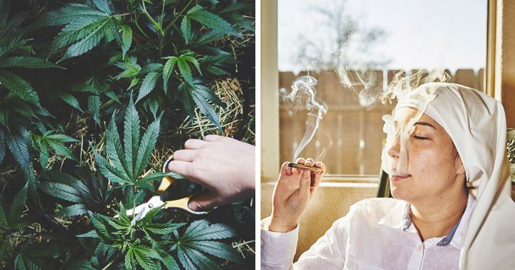 Nuns Growing Weed To Heal The World | Bored Panda