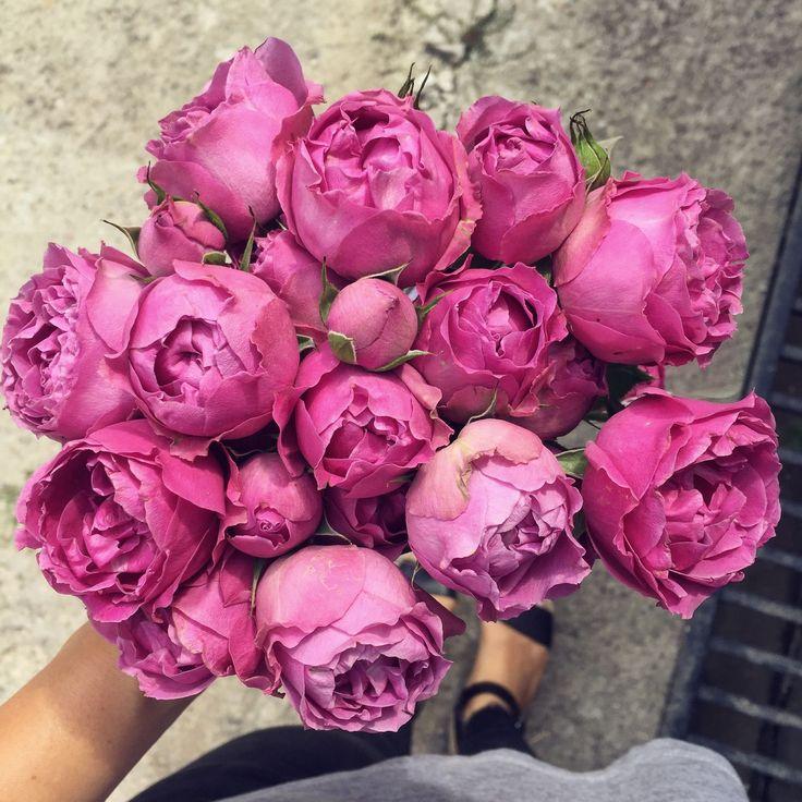 Flori pentru tine  #florariataj #tajthesecretgarden #florariepitesti