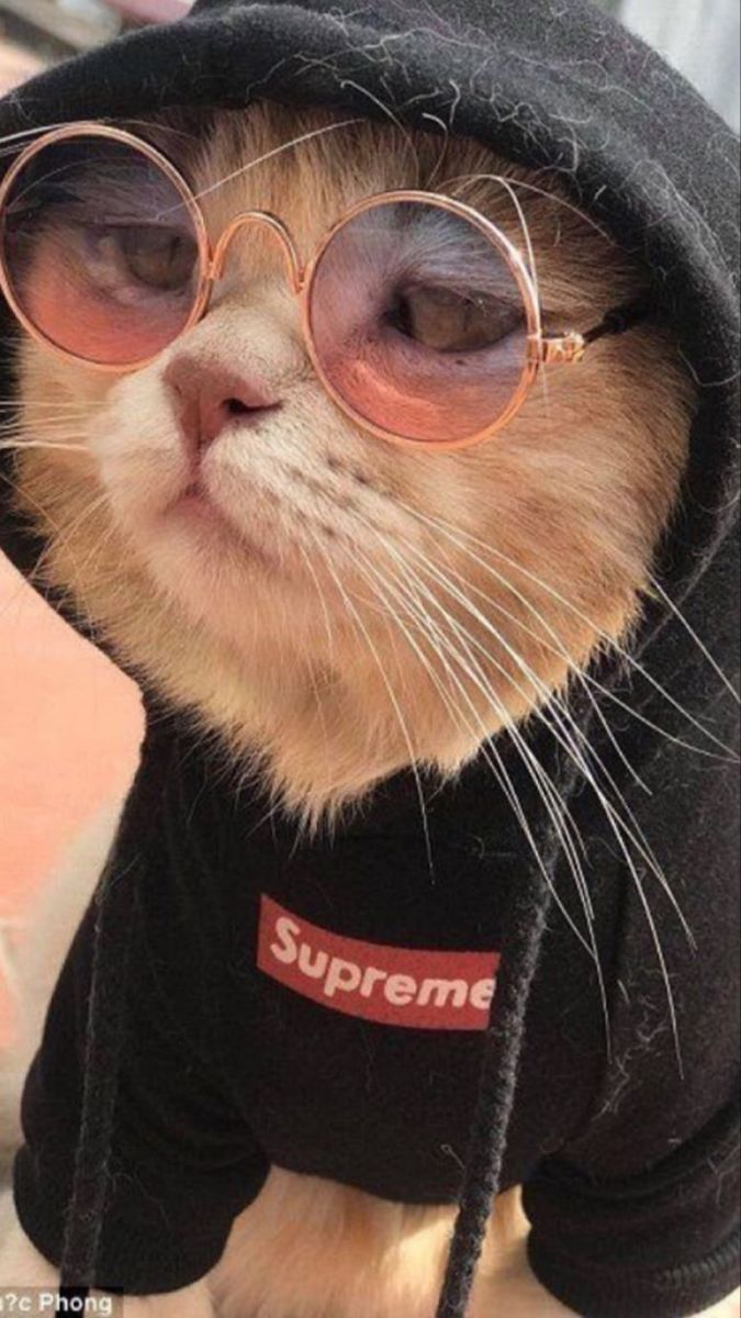 Thug Cat With Spectacles And Supreme Black Hoodie Cute Cat Wallpaper Cat Dresses Funny Cat Pictures