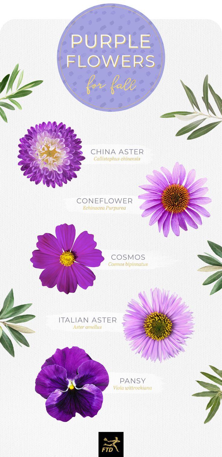 50 Types of Purple Flowers in 2020 Purple