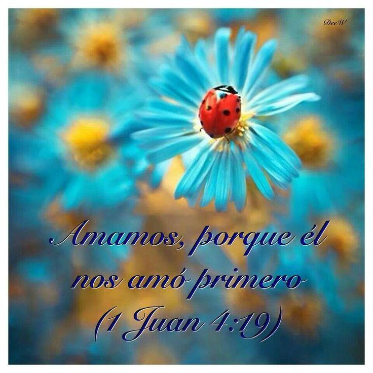 Nosotros le amamos a el, porque el nos amo primero.   La Primera Epistola Universal de  San Juan Apostol - Capitulo 4:19