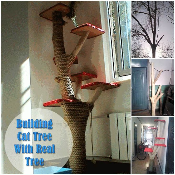 Diy cat tree using real tree the image for How to build a cat perch