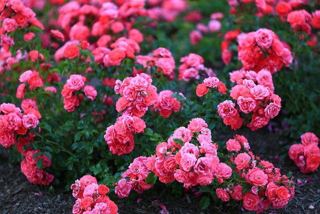 envoyer un bouquet de fleur 51 #fleurs #bouquet