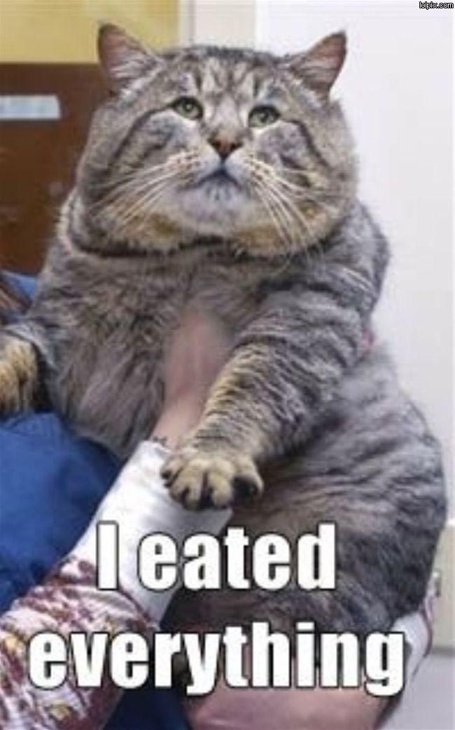 Best Fat Cats Ideas On Pinterest Fat Cats Funny Fat Cat - Meatball the fat cat kept eating everyones food so his owners came up with a clever solution