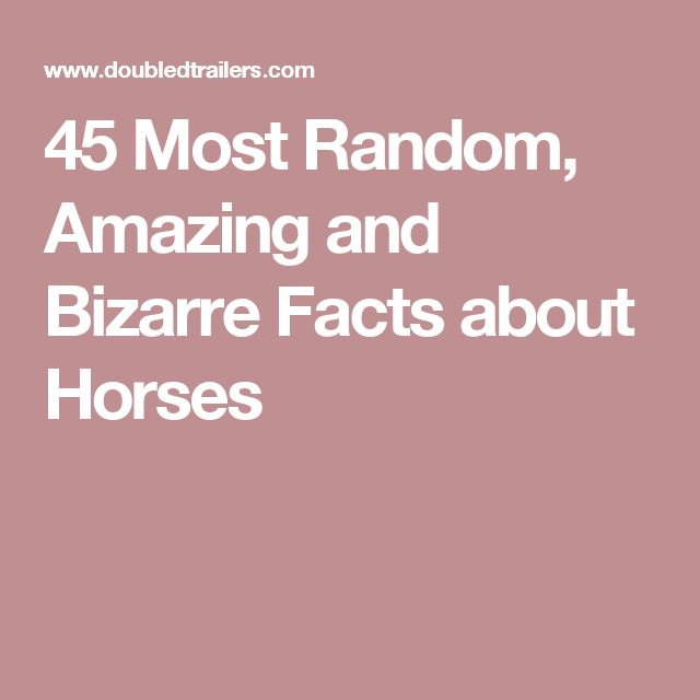 45 Most Random, Amazing and Bizarre Facts about Horses