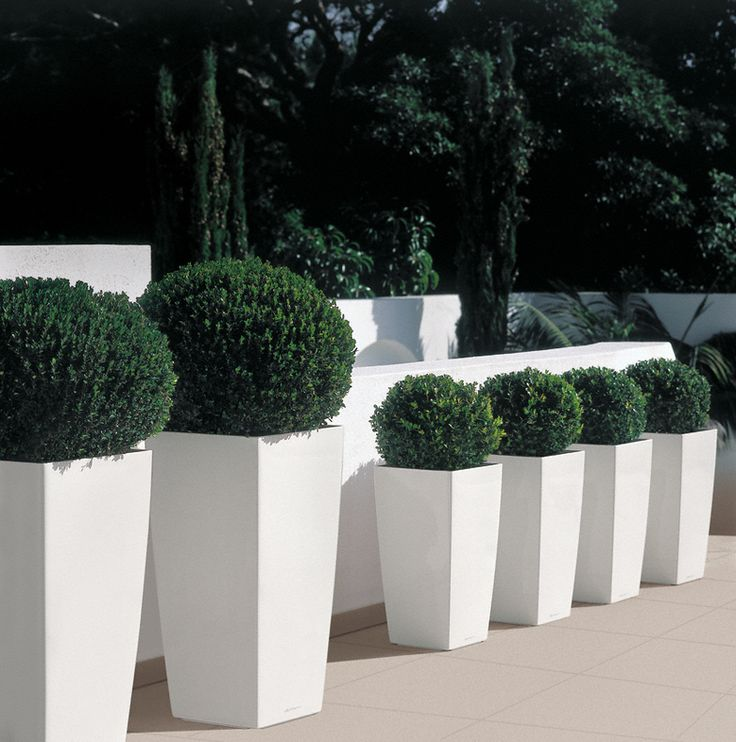 Along wall with seat bathroom side x3 - Very striking, beautiful white high gloss square lechuza cubico resin planter!