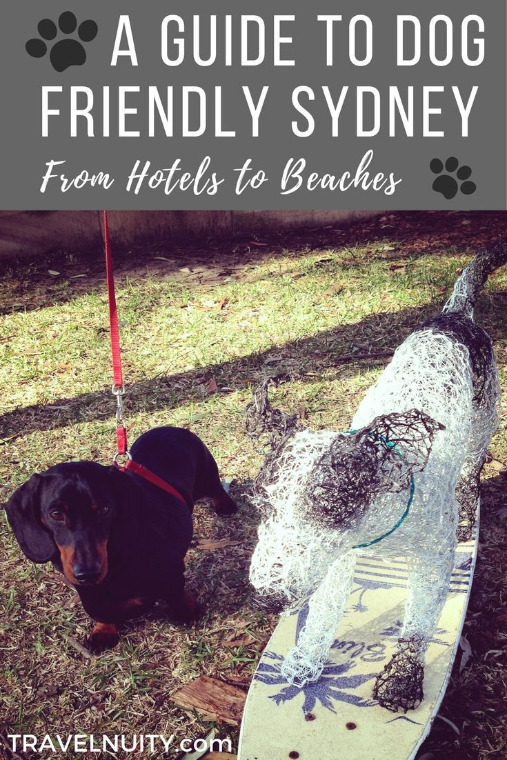 Visiting Sydney with a dog? I share my favourite tips to dog-friendly Sydney, from where to stay and dine out to the best beaches, parks and walks.