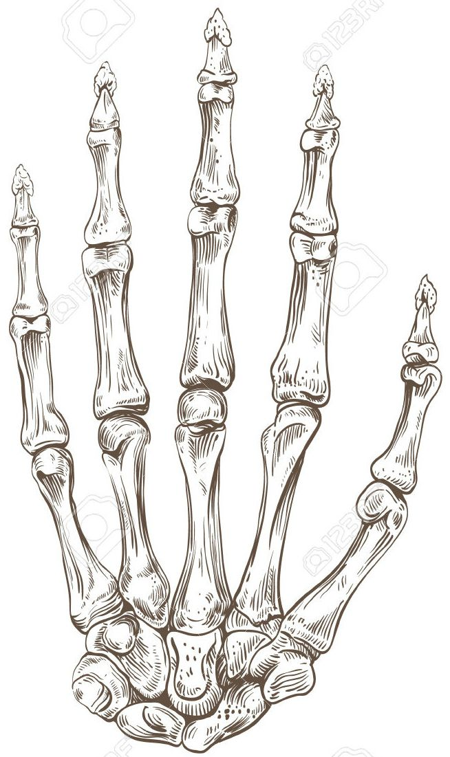 Pin by Lizzie Boone on 1 Hand art drawing, Anatomy art
