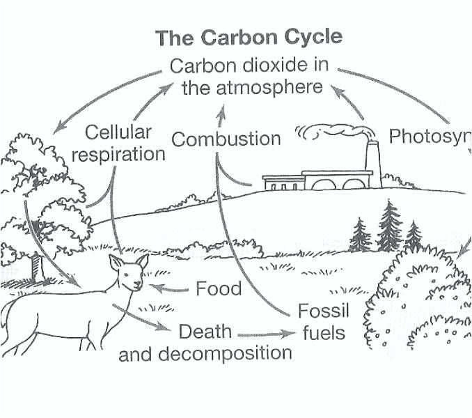 Blank Carbon Cycle Diagram Worksheets Carbon Cycle Nitrogen Cycle Carbon Dioxide Cycle