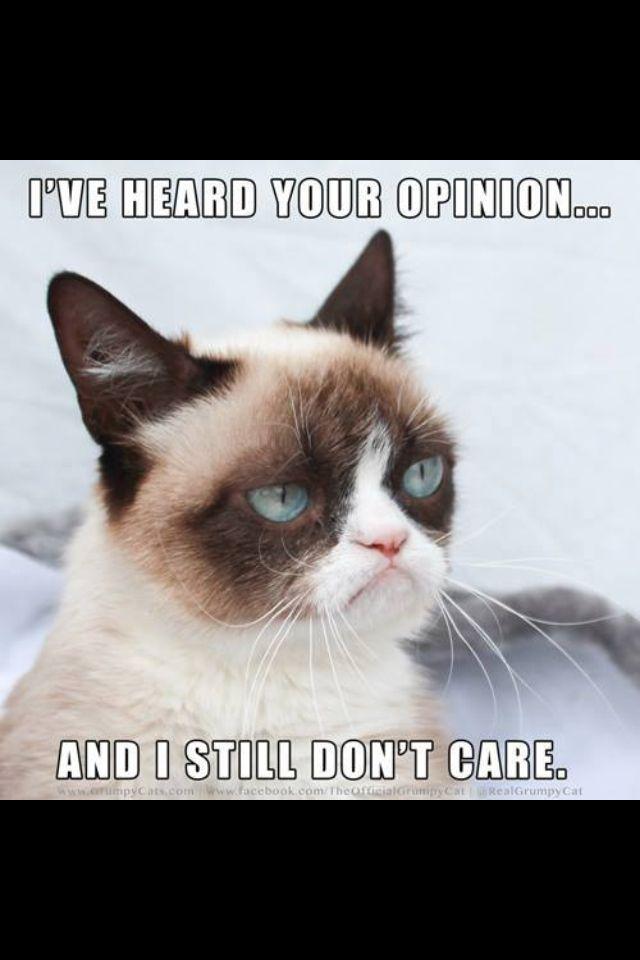 angry cat meme no - photo #36