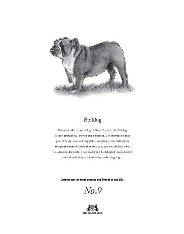 Bulldog Tea Towel  The Kennel Club Official Shop