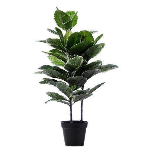 Variegated Rubber Fig Potted Plant