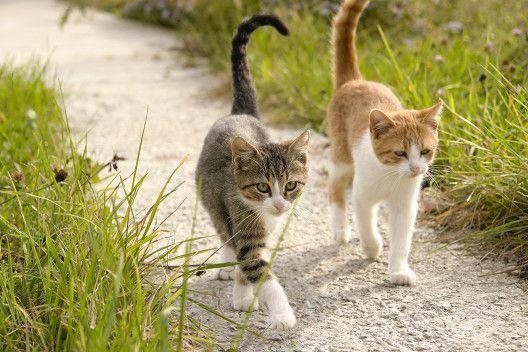 Bo za jednym kotem drugi kot
