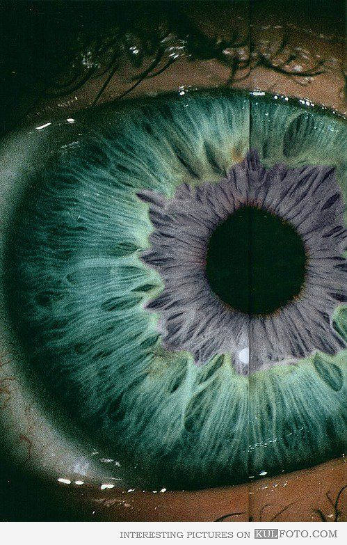 The Eye - Close up picture of beautiful eye iris.