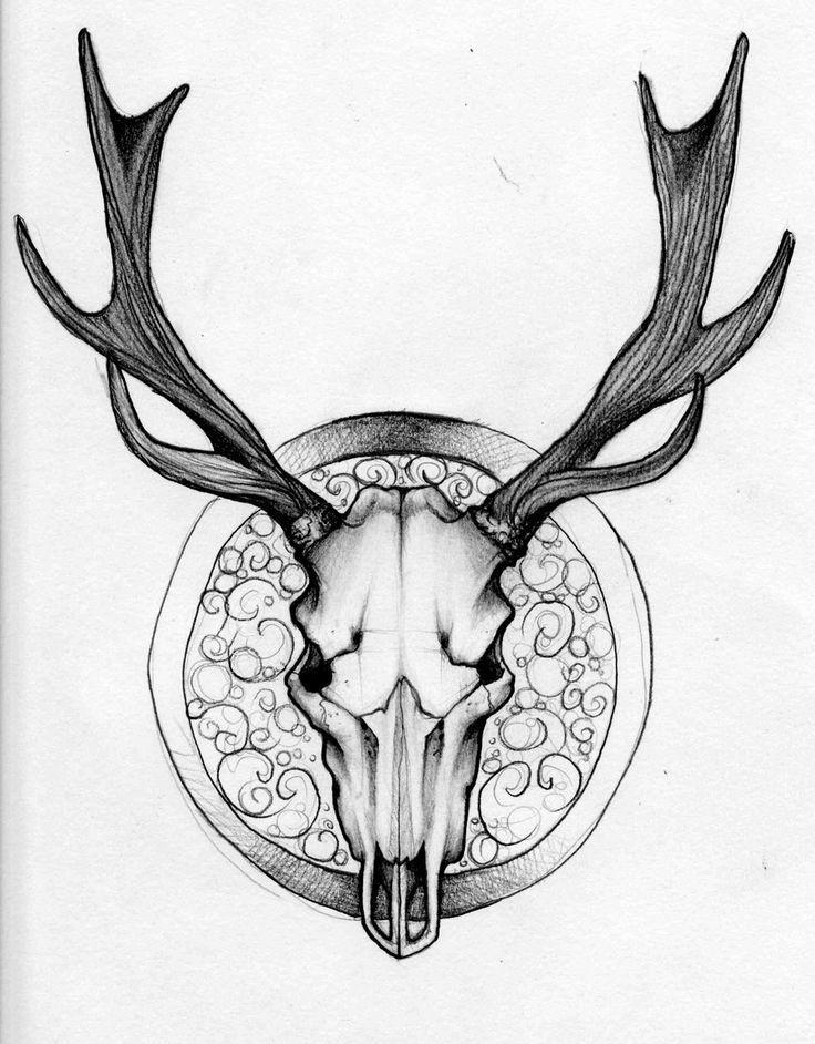 Deer Skull Drawing | Deer Skull ... - curiousclipart.com