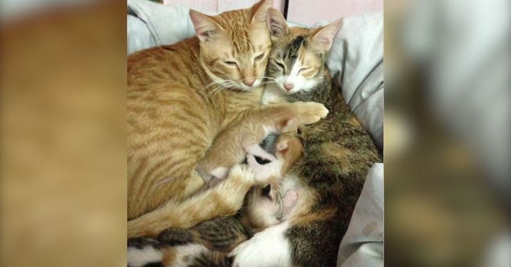 Normally mother cats seem to care for kittens all on their own, but one dad decided he wanted to help, too.