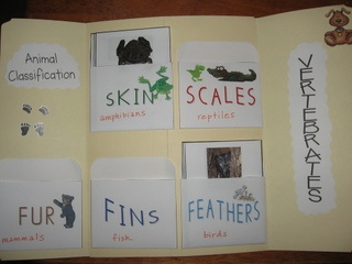 Animal Classification System Resources from Homeschool Share